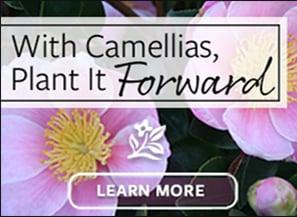 9-11_MON_286x205_NTT_Camellias