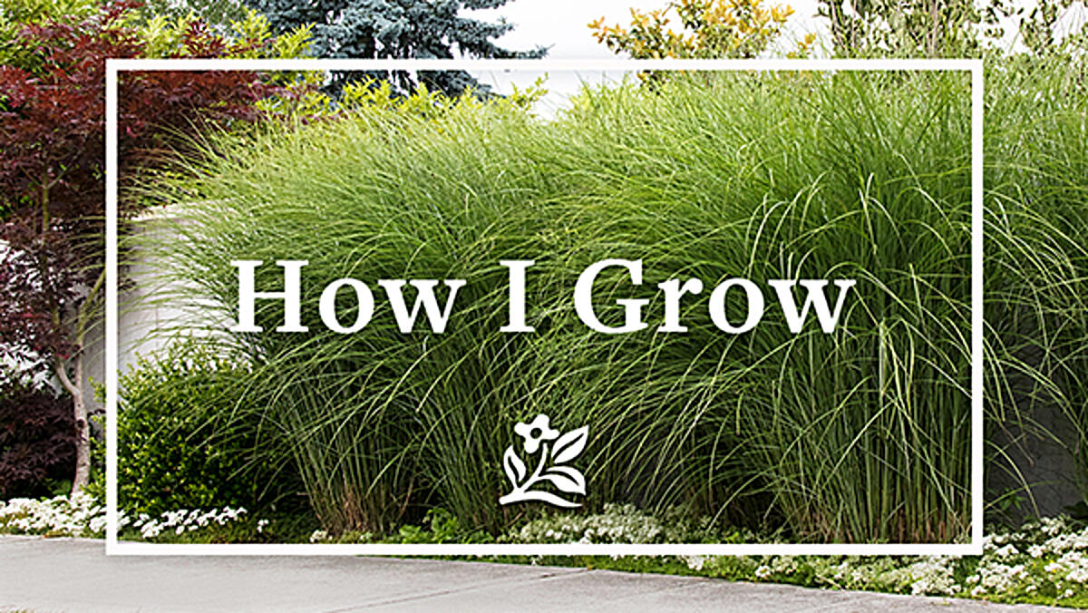 Blog_header_600_howigrow