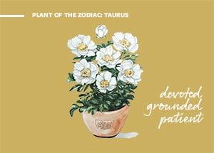 CRM_ZODIAC_Taurus
