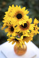Helianthus-Sunbelievable-Bouquet