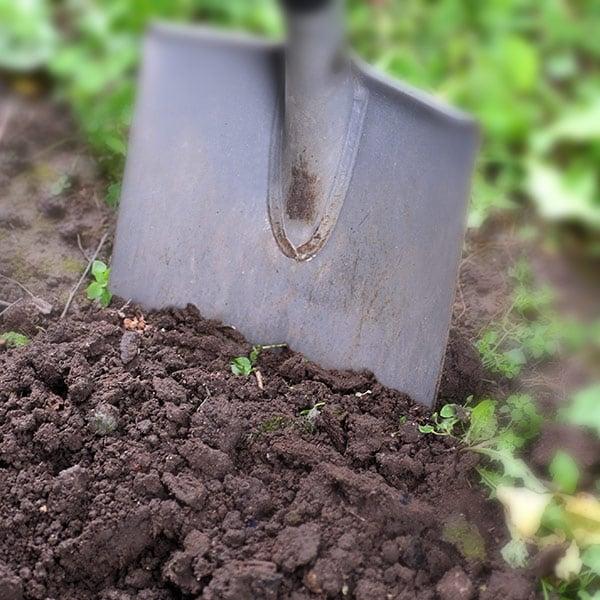 soil_600sq_2